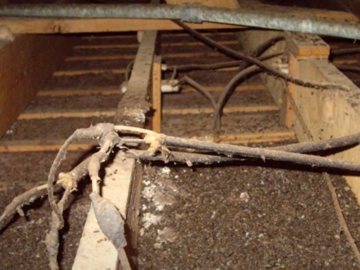 Know About Bats In Attic