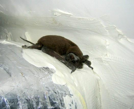 Bat Stuck