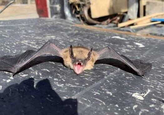 Bats Chew On Wires