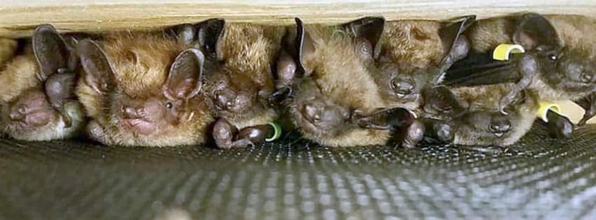 Is bats killing legal
