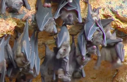 Bats Roosting; Is bats killing legal