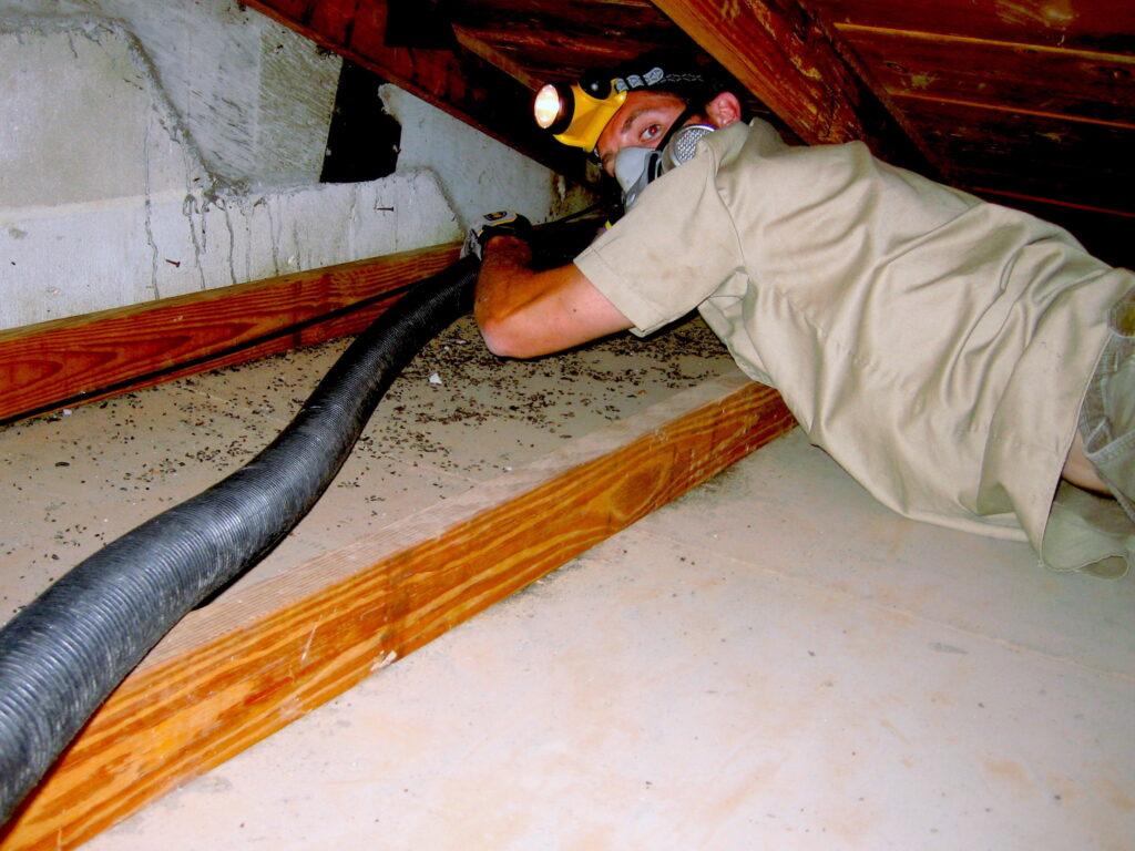 attic clean up; Bat Urine