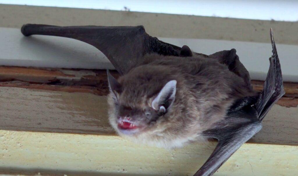 bat appearance (1)