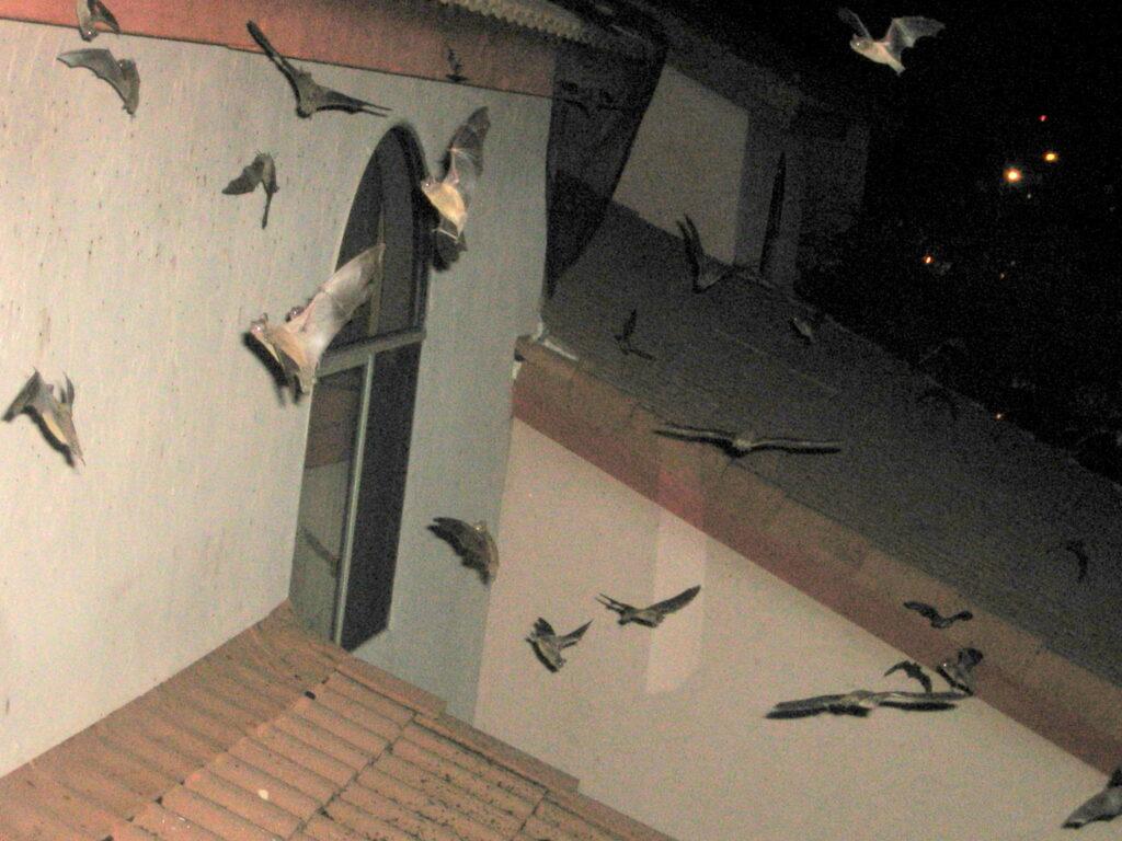 bat colony flying