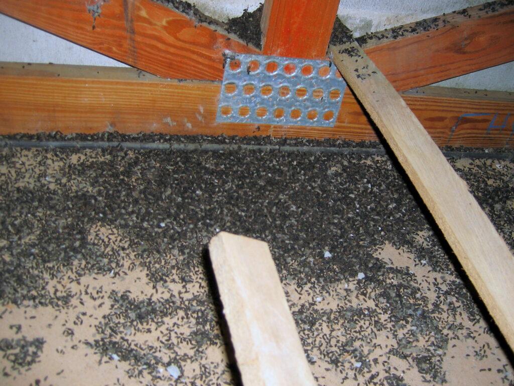 bat droppings; Bat Droppings Removal Tips