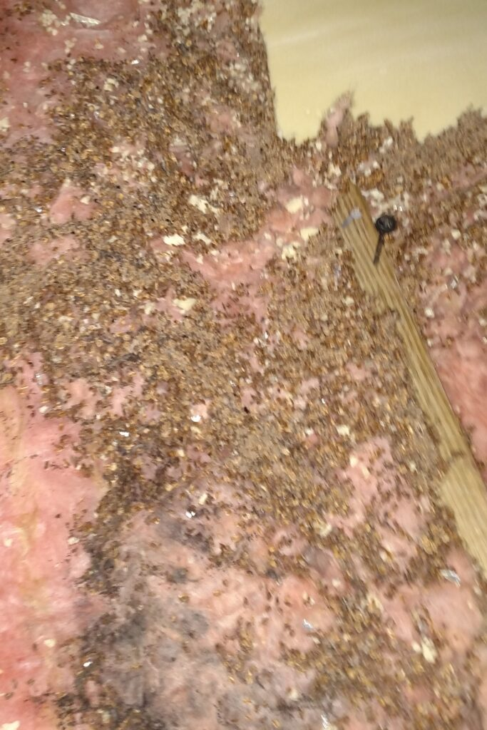 bat droppings on insulation
