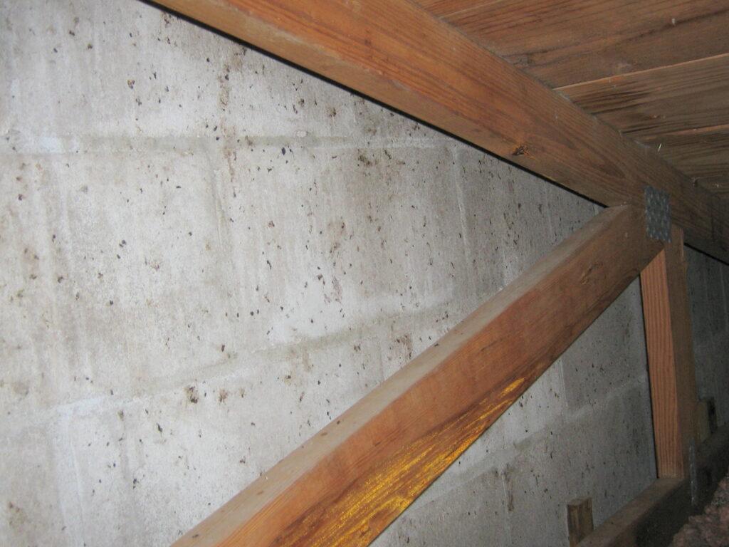 bat marks on wall