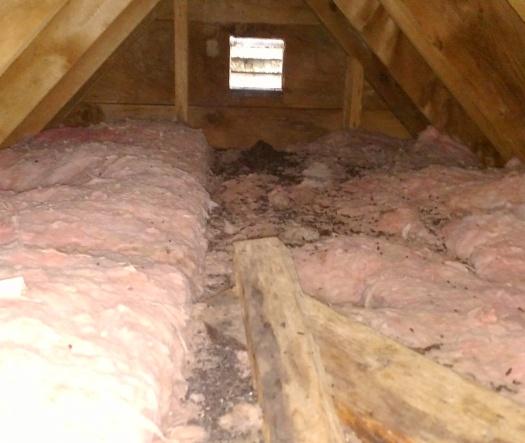 bat mess in attic