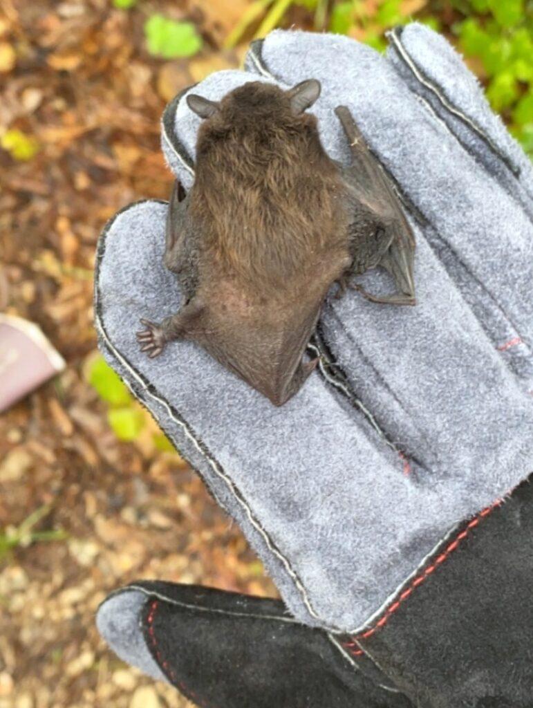 bat on glove