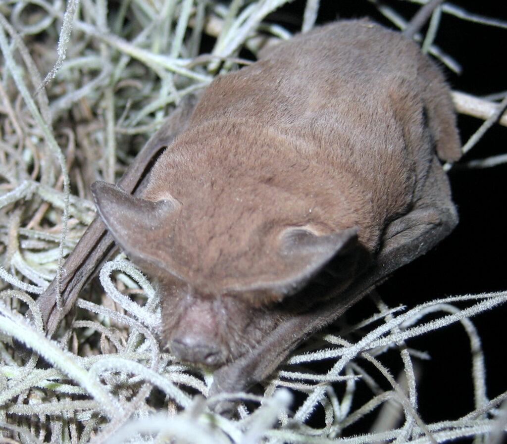 What Do Bats Eat