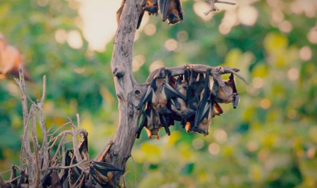 bats hanging on tree