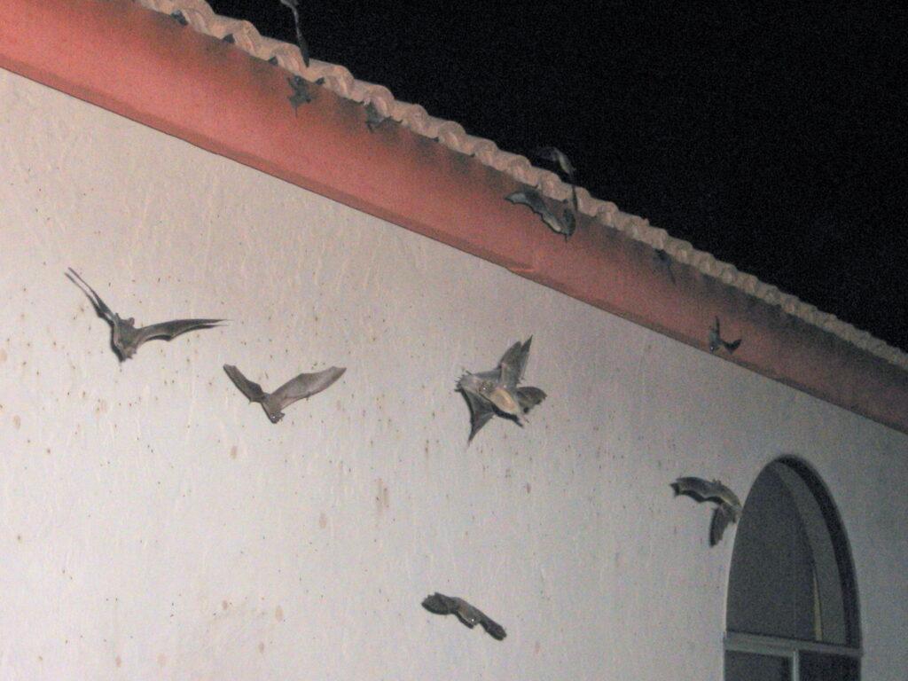 Bat Natural Deterrents