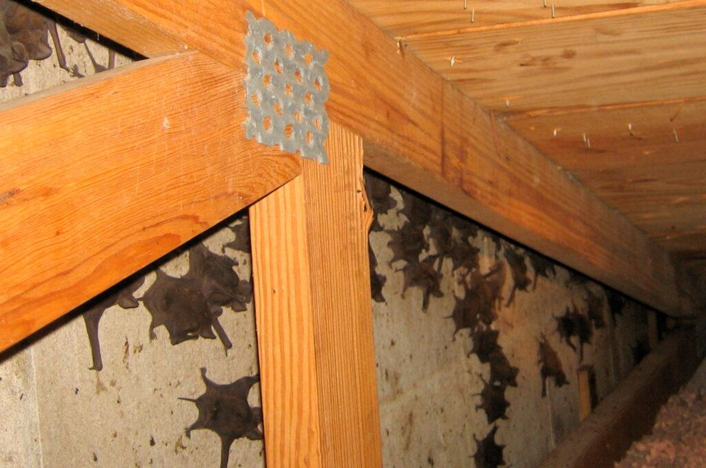 Bats In Log Cabin