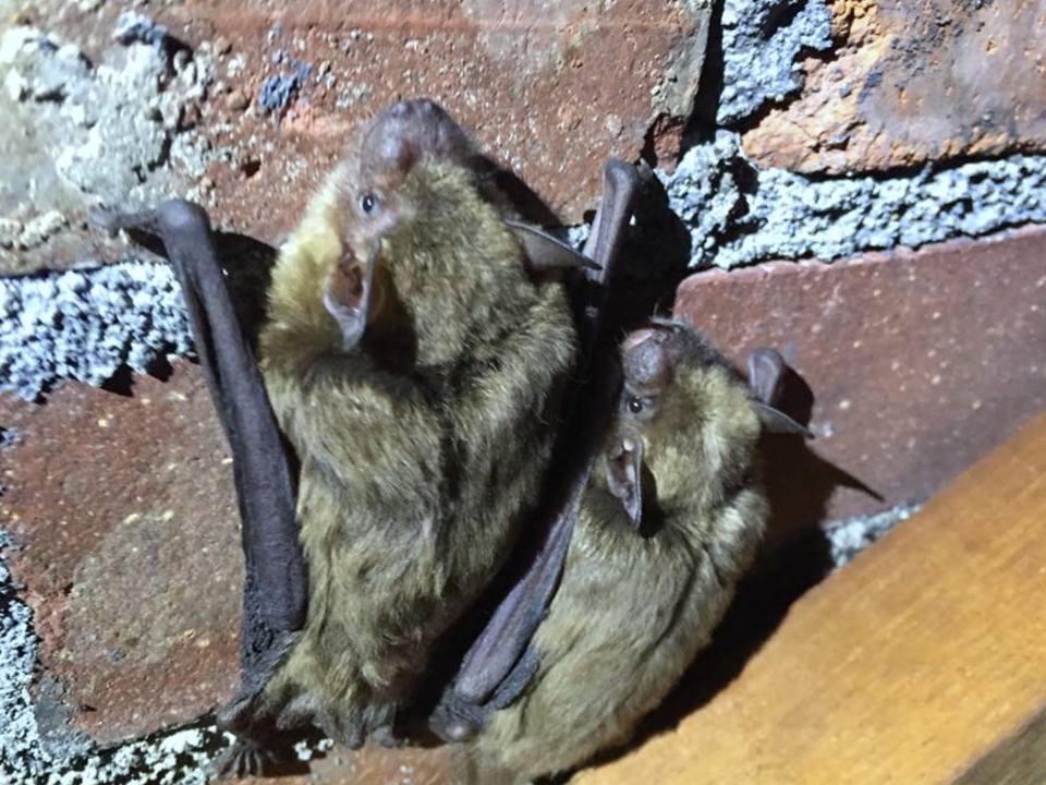 Bat Valve