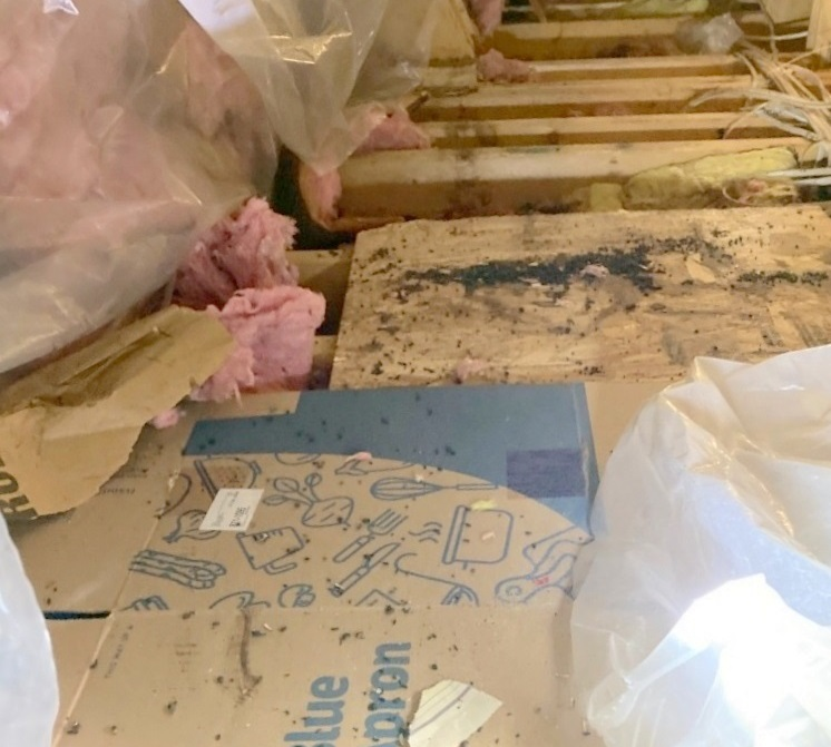 restoring attic; Insurance Cover Bat Damage