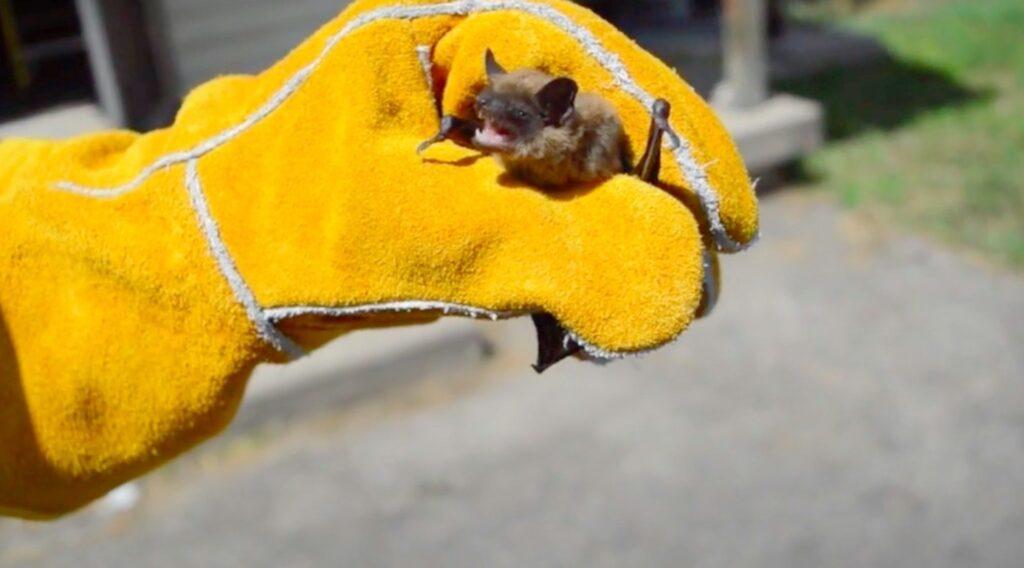 small bat (1)