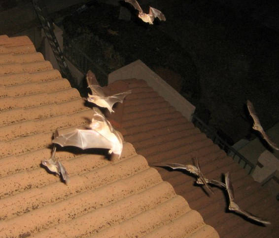 Bats Attracted To House